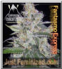 Mephisto Auto Fantasmo Express Female 3 Seeds